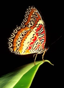 Butterfly on Edge of Leaf (Alt Text)